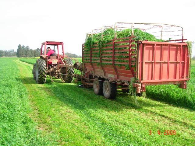 caramba mix tohum fiyatı-ryegrass tohum fiyatı